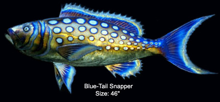 Blue-Tail Snapper